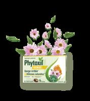 Phytoxil Gorge & Défenses Naturelles Pastilles B/20 à SAINT-GEORGES-SUR-BAULCHE