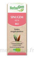 Herbalgem Sinugem Solution Buvable Bio Fl Cpte-gttes/30ml à SAINT-GEORGES-SUR-BAULCHE